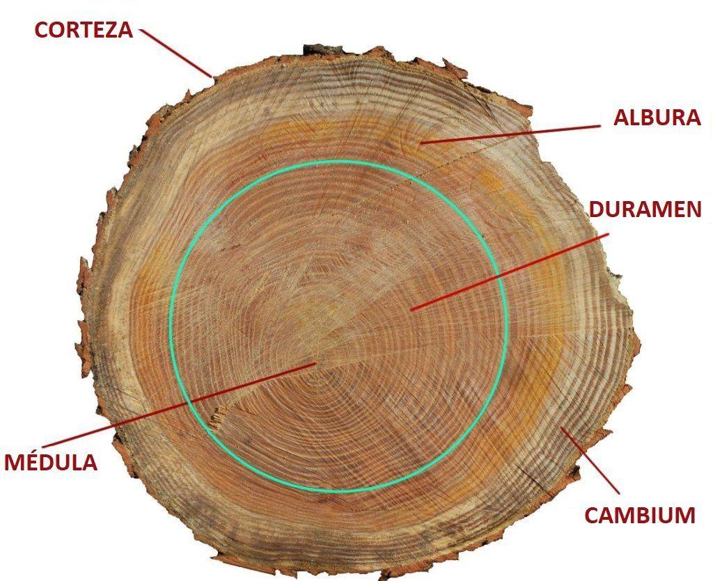 Ventajas de comprar un cobertizo de madera Tronco
