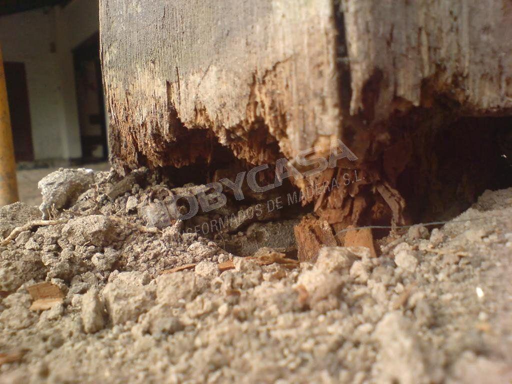 Que es la madera con tratamiento autoclave podrida