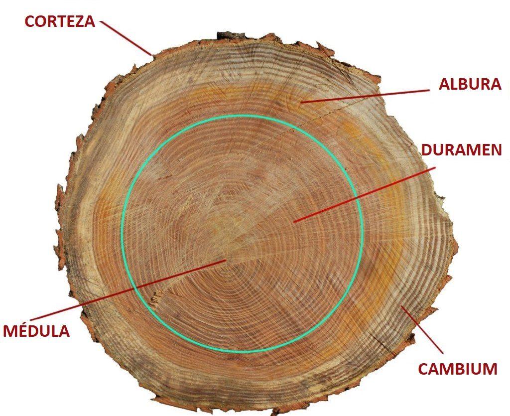 Grosor de madera Partes Tronco